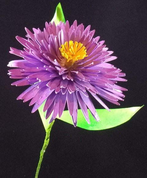 aster flower small